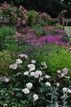 Mixed-border, Walled garden, Floors Castle in Scotland