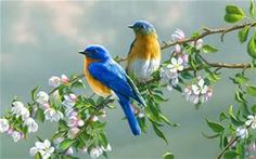 beautiful coloful birds - Bing Images