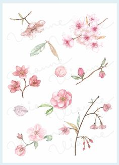 CLIP ART Watercolor Vintage Cherry Blossom Set. 10 by Vianneart