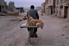 All Creatures Great and Small, Kabul Afghanistan | Steve McCurry