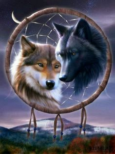Wolf Gurus is the number 1 eCommerce site about wolf. until today we sell about Item About wolf, native america, viking, dream catcher. Beautiful Wolves, Animals Beautiful, Cute Animals, Anime Wolf, Wolf Mates, Tier Wolf, Wolf Dreamcatcher, Dreamcatcher Wallpaper, Two Wolves