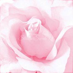 "Rose Art, Pink Rose Photo, Garden Photography, Pink Flower, Romantic Nature Print, Macro Modern Art, Minimalism, Rose Bud- ""Blushing"" by StudioSwede13 on Etsy https://www.etsy.com/au/listing/253207186/rose-art-pink-rose-photo-garden"