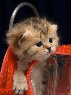 gifs divers - Page 8 Little Kittens, Cute Cats And Kittens, Kittens Cutest, Animals And Pets, Funny Animals, Cute Animals, Kitten Love, I Love Cats, Gato Gif