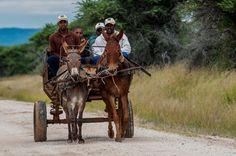 Donkey Cart by Johan Jooste on Donkey Drawing, Cool Photos, Amazing Photos, African Men, Farm Yard, Landscape Photos, Farm Animals, South Africa, Art Photography