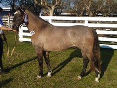 Criollos Horse Breeders Association