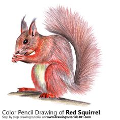 Red Squirrel with Color Pencils [Time Lapse]