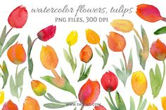 Watercolor Flowers, Tulips by swiejko on Creative Market