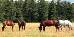 Horse And Foal On Pasture 3 #Agriculture, #Animals, #Cloud, #Farm, #Foal, #Forest, #Grass, #Horse, #Meadow, #Meat, #Nature, #Pasture, #Scenery, #Sky, #SunnyDay, #VulkanVH http://goo.gl/tyyPxR