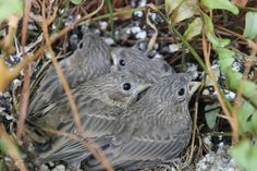 Cute baby birds that were in a flower pot on my front porch