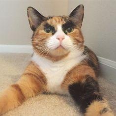 ごんぶと眉毛の猫が迫力満点!