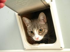 Don't like the smell of cat litter...so we put a cat box in the garage with a door from the laundry room....made the cats  go through once and after that they loved it! No smell and No mess in the house.