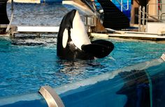 PETA submits official comments asking the Association of Zoos and Aquariums to hold the cruel animal park responsible for violations.