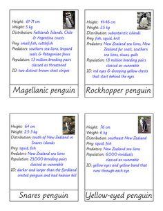 penguin4 info by jojoebi, via Flickr