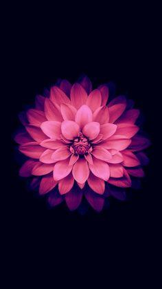 Flower + Filtre
