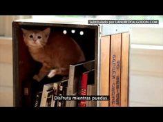 Los consejos de un gato adulto a uno pequeño en Dear Kitten   La nube de algodón