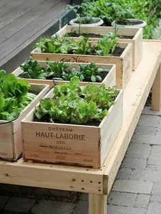 Garden Huerta
