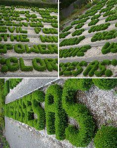 Fantasía  arbustos.jpg