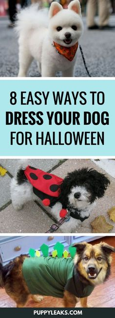 9f5c6210d Looking for some simple ways to dress your dog up for Halloween  Here s 8  easy