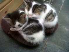 Have you ordered your slipper warmers for this Winter?  So typical of kittens...and always brings a smile!