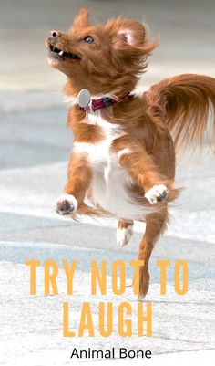 #funnyanimals #funnyanimal #animalsfunny #animalfunny #animals #funnycats #babyanimal #animals_happy #fluffypets #animalsoninstagram