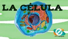 La célula. Guía para aprender sobre las células