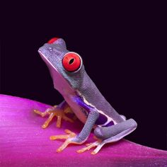 Red eyed frog by auhagen Funny Frogs, Cute Frogs, Frog Pictures, Animal Pictures, Reptiles And Amphibians, Mammals, Beautiful Creatures, Animals Beautiful, Frosch Illustration