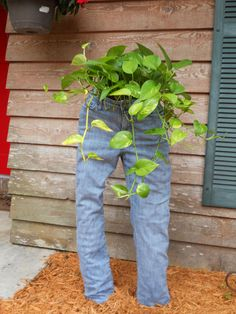 Blue Jeans Planter: Made from an old pair of jeans & rolled chicken wire plus a couple of pipes stuffed in to the legs. The plant was set into the waistband.