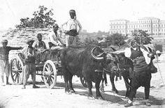 MAÇKA, 1870 MANDA ARABASI