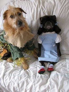 'Pin-tober' Viewer Photo Submissions! | AndersonCooper.com #Pintober Awesome Costumes, Animal Crackers, Submissive, Creepy, Halloween, Dogs, Cute, Crafts, Animals