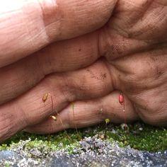 Gorgeous moss