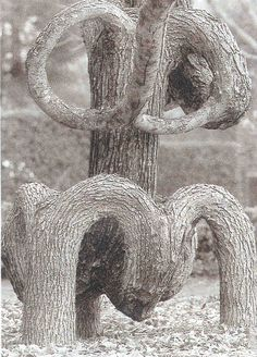 4 trees grafted together