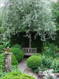 Jardin de Castillon, près de Bayeux by tordouetspirit with Pyrus salicifolia 'Pendula' forming the focal point behind the garden seat.