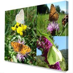 4 Vlinders op Canvas