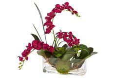 """19"""" Orchid & Succulent in Vase, Faux"""