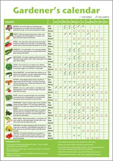 Homemade* A3 novice gardener's/beginner's vegetable growing gardening calendar (folded to A4), ideal small gift for mother's day, father's day, classrooms or schools offering horticultural lessons NOT LAMINATED