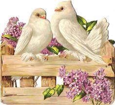Oblaten Glanzbild scrap die cut chromo Taube dove XL  pigeon Paar  Flieder lilac