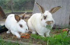 conejos comiendo | Echemos un vistazo a su perfil nutricional: