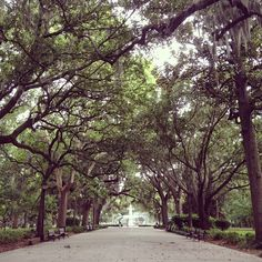 FEBRUARY 25th~QUIET DAY!  Now this sure LQQKS like a super quiet place...a quiet day in Forsyth Park