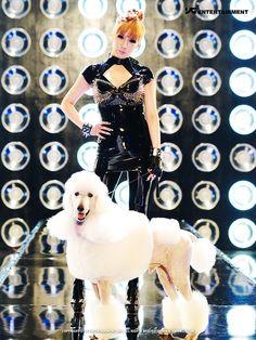 Poodle Dog opawz.com  supply pet hair dye,pet hair chalk,pet perfume,pet shampoo,spa....