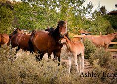 Wild Horses       Virginia City, Nevada
