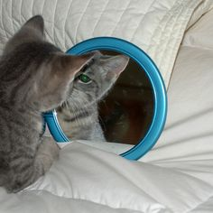 Who is the Kitty in the Mirror by sandra goroff (c) sgma@aol.com