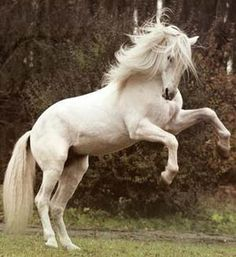 Google Image Result for http://www.cashiersncrealestate.com/graphics/white%2520stallion.jpg