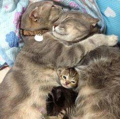 Loving family Хорошие дети рождаются от большой любви...