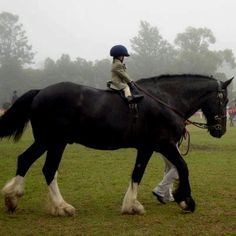 Adorable kid on big horse