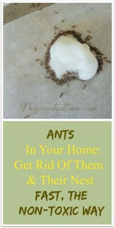Remedies For Water Retention Get Rid Of Ants, Fast, The Non-Toxic Way. Simple recipe to make a non-toxic (for pets and kids) but effective homemade ant trap using boric acid powder and sugar. Ant Killer Recipe, Homemade Ant Killer, Ant Traps Homemade, Boric Acid Ants, Kitchen Ants, Ant Remedies, Flea Remedies, Natural Remedies, Boric Acid Powder