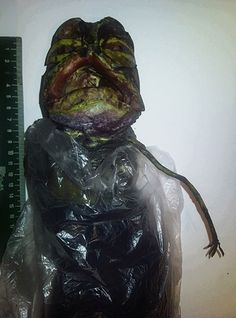 """16 Nov 'I've got an alien in my fridge' - """"A RUSSIAN woman has sparked an alien investigation after claiming she had an extra-terrestrial in her FRIDGE. Marta Yegorovnam told boffins she found the weird creature two years ago and has been keeping Aliens And Ufos, Ancient Aliens, Strange Beasts, Strange Things, Strange Animals, Paranormal, Alien Photos, Ufo Sighting, Weird Creatures"""