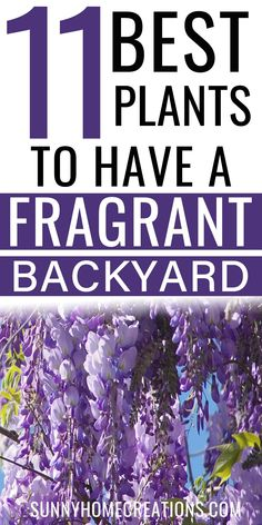 11 Best Plants for a fragrant backyard. Add these plants to your landscaping for beautiful yard and garden. These plant ideas are perfect. ideas Most Fragrant Plants for Your Garden Garden Yard Ideas, Lawn And Garden, Garden Projects, Garden Sheds, Patio Ideas, Backyard Ideas, Diy Projects, Outdoor Plants, Garden Plants
