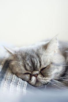 fat cat. ;)