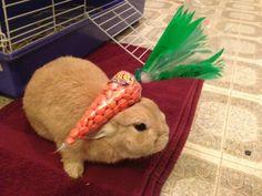 Vinny from Stuff On My Rabbit.