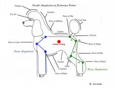 diagram for standard poodle face clipping - Google Search                                                                                                                                                      Más